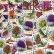 Arborétum társasjáték - Renegade